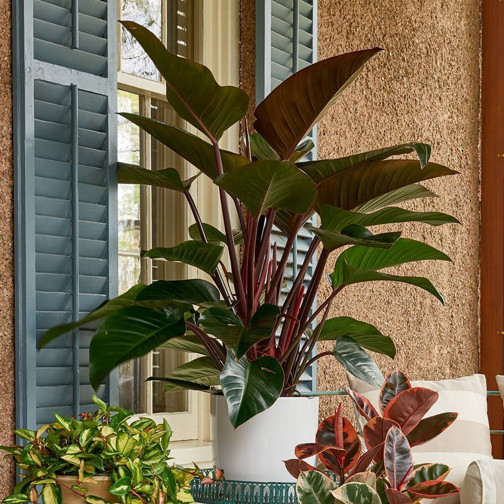 Hard-to-Find Houseplants