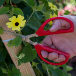 Unlimited Garden Scissors