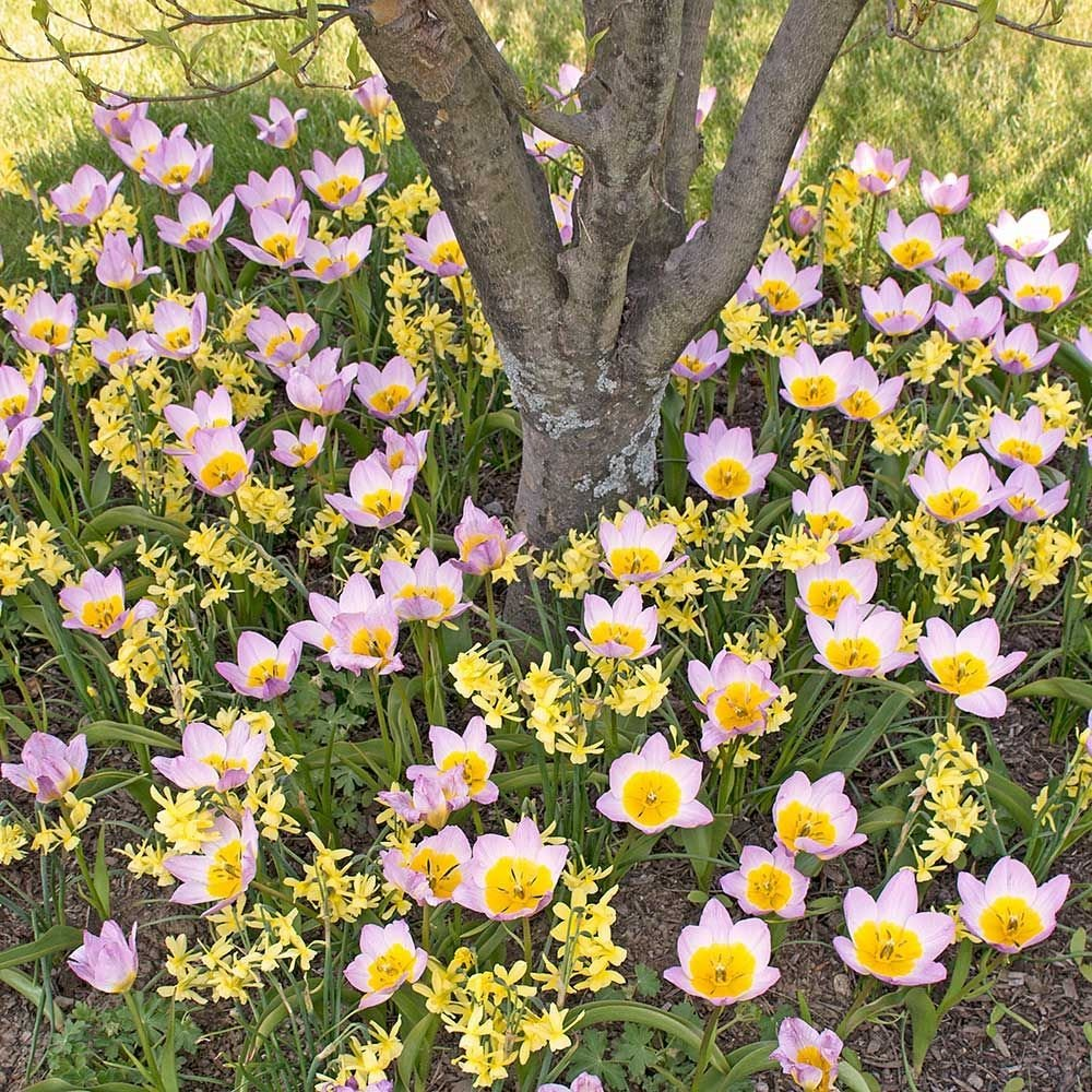Ground covers with bulbs white flower farm ground covers with bulbs mightylinksfo