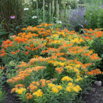 Asclepias Gay Butterflies Mix