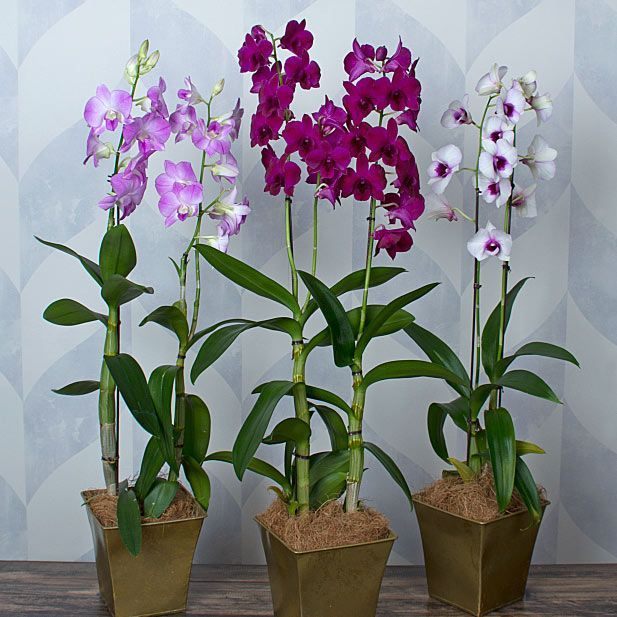 Orchids by the Month