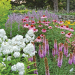 Butterfly Magnet Perennial Collection