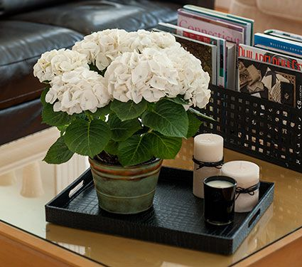 Hydrangea White Robe in metal cachepot