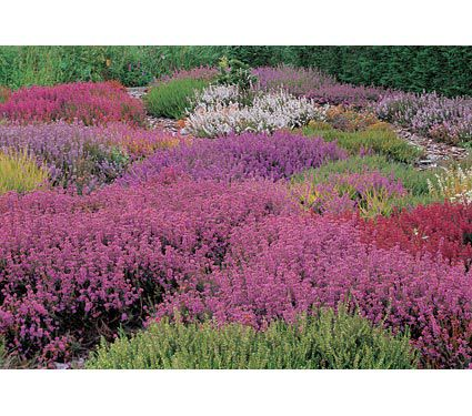 Brigadoon Heather Collection