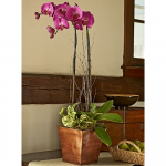 Pink Moth Orchid Garden with Seasonal Foliage Plant in 7