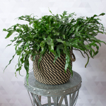 Customer-Favorite Houseplants