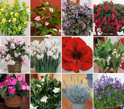 Flowering Plants By The Month