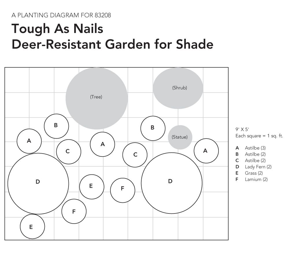 Tough as Nails Deer-Resistant Garden for Shade on planting zone 6, annuals zone 6, landscaping zone 6, flowers zone 6, tomatoes zone 6,