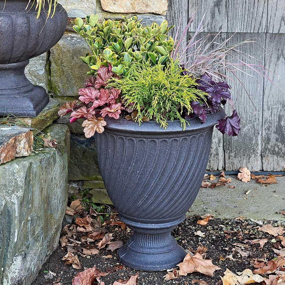 Indian Summer Shrub & Perennial Collection