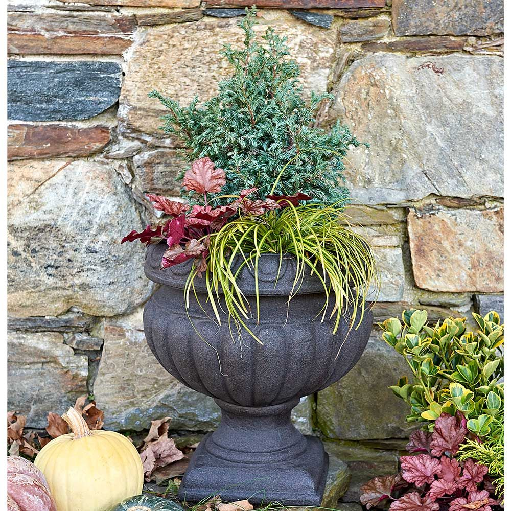 Autumn Glow Shrub & Perennial Collection