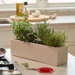 Savory Herb Collection in resin planter
