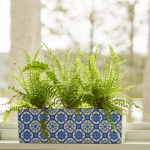 Boston Fern Trio in ceramic planter