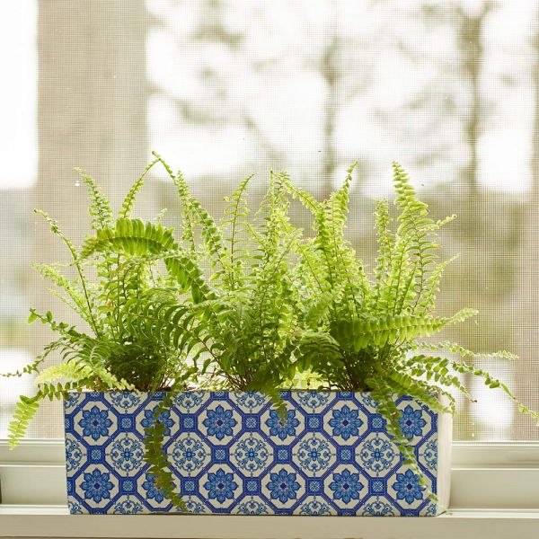 Compact Boston Fern Trio In Ceramic Planter White Flower Farm