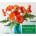 Tangerine Pops Bouquet with Vase Plus $50 Gift Card - Standard Shipping Included