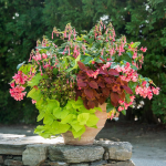 All Annual Container Garden Designs