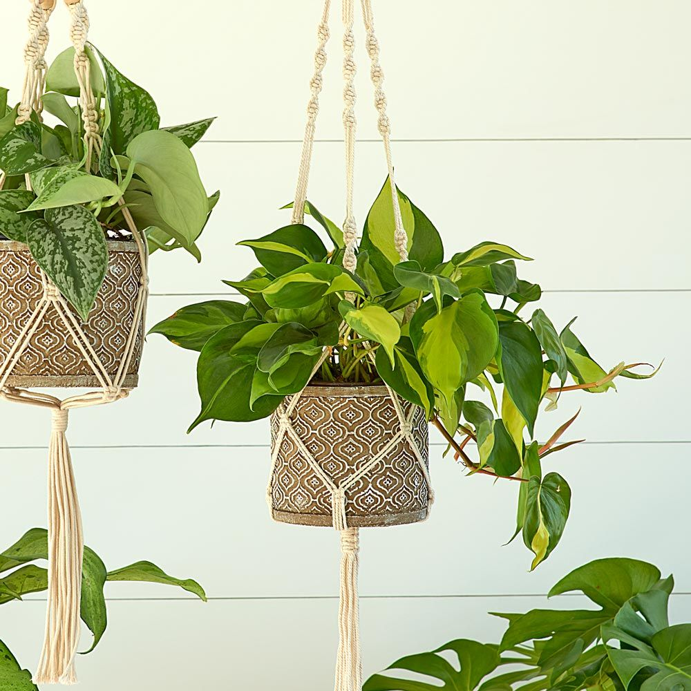 Skye Macrame Plant Hanger with Moroccan Mosaic Pot