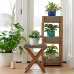 Acacia Plant Tower & Stand