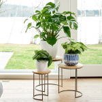 Nesting Mango Wood Plant Stands, set of 3