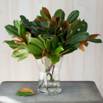 Magnolia Stems (set of 10 stems)