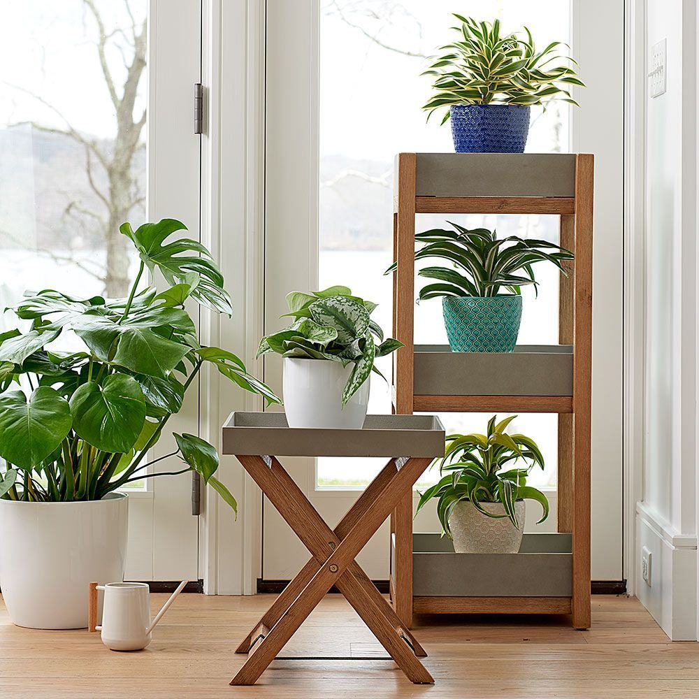 Plant Stands, Trays & Saucers | White Flower Farm