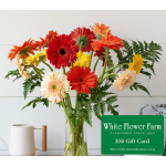 Tropical Breeze Gerbera Daisy Bouquet with Vase Plus $50 Gift Card - Standard Shipping Included