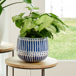 Arrowhead Vine 'White Butterfly' in Blue Dots Motif pot