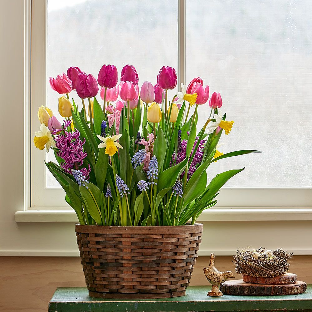 Pastel Parade Bulb Collection, 62 bulbs in large woven basket