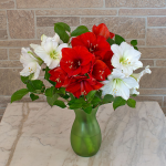 Merry & Bright Amaryllis Bouquet