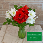 Merry & Bright Amaryllis Bouquet with Vase Plus $50 Gift Card - Standard Shipping Included