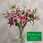 Radiant Stars Bouquet with Vase Plus $50 Gift Card - Standard Shipping Included