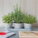 Cook's Herb Trio in embossed pots