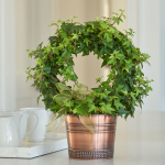 English Ivy Ring in metal cachepot