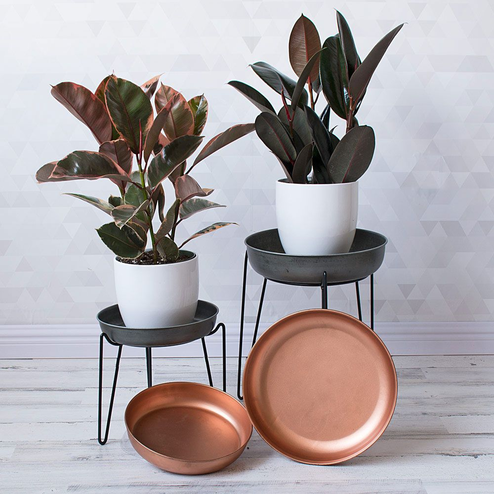 Soho Studio Saucer Stands & Trays