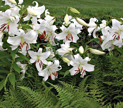 All preplanned gardens plant collections white flower farm all preplanned gardens plant collections mightylinksfo