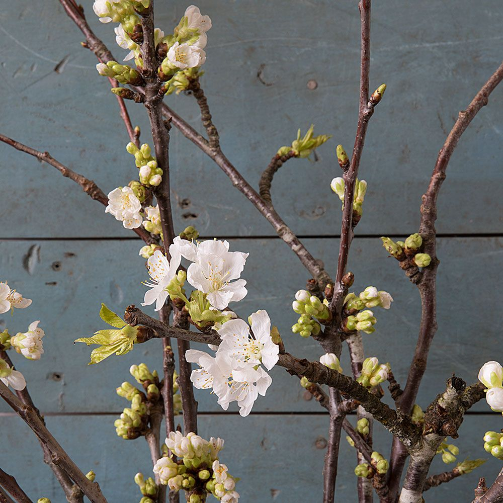Image result for blooming branches with buds