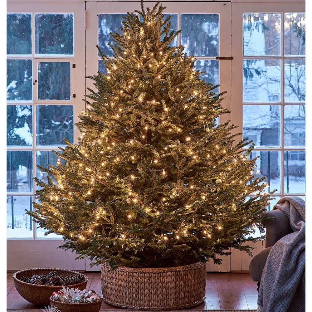 Where To Cut Christmas Trees: Full Sized Christmas Trees