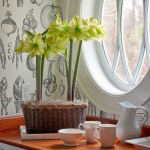 Customer-Favorite Amaryllis