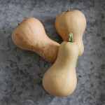 Butternut Squash 'Butterscotch'