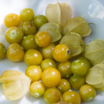 Ground Cherry: Physalis pruinosa