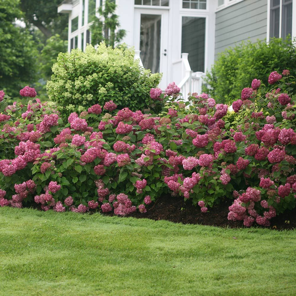 Front Porch Landscaping Curb Appeal Plants