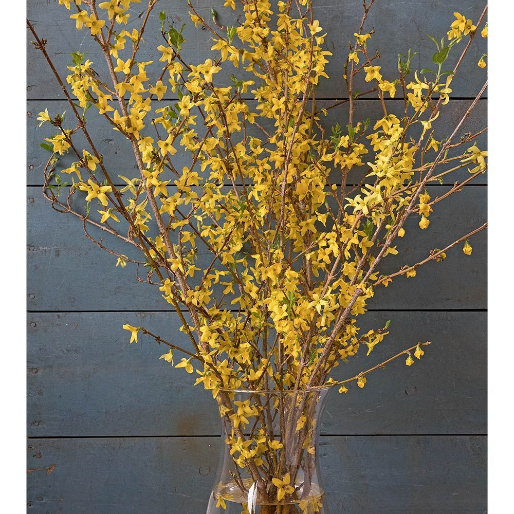 Forced Flowering Branches