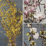Flowering Branches Continuity, January - March