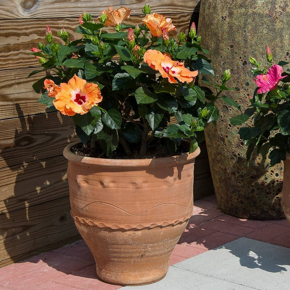 Annuals for Sunny Patio