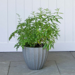 Ashburn Pot, small