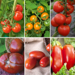 Extend Your Harvest Tomato Collection - Standard Shipping Included