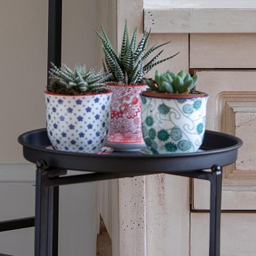 Easy-Care Succulent Trio in Porcelain Pots