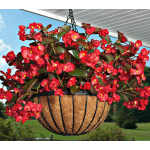 Begonia Big™ Red Bronze Leaf