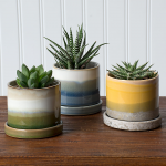 Easy-Care Succulent Trio in Mission Beach Pots