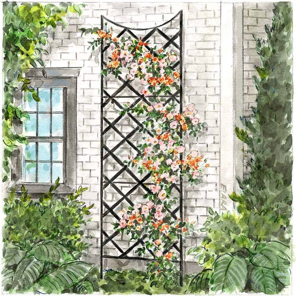 Large Rose Trellis