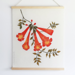 Campsis radicans Print from Superfolk - Standard Shipping Included